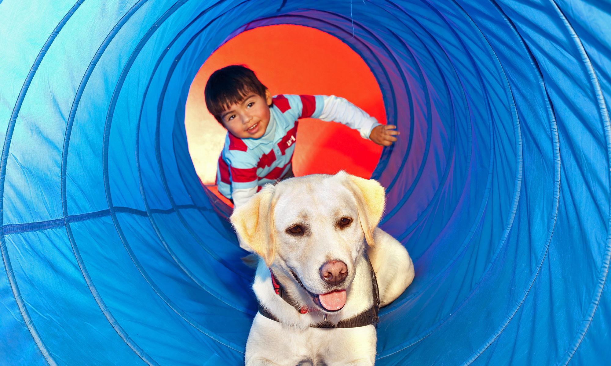 diy backyard playground ideas for your dog