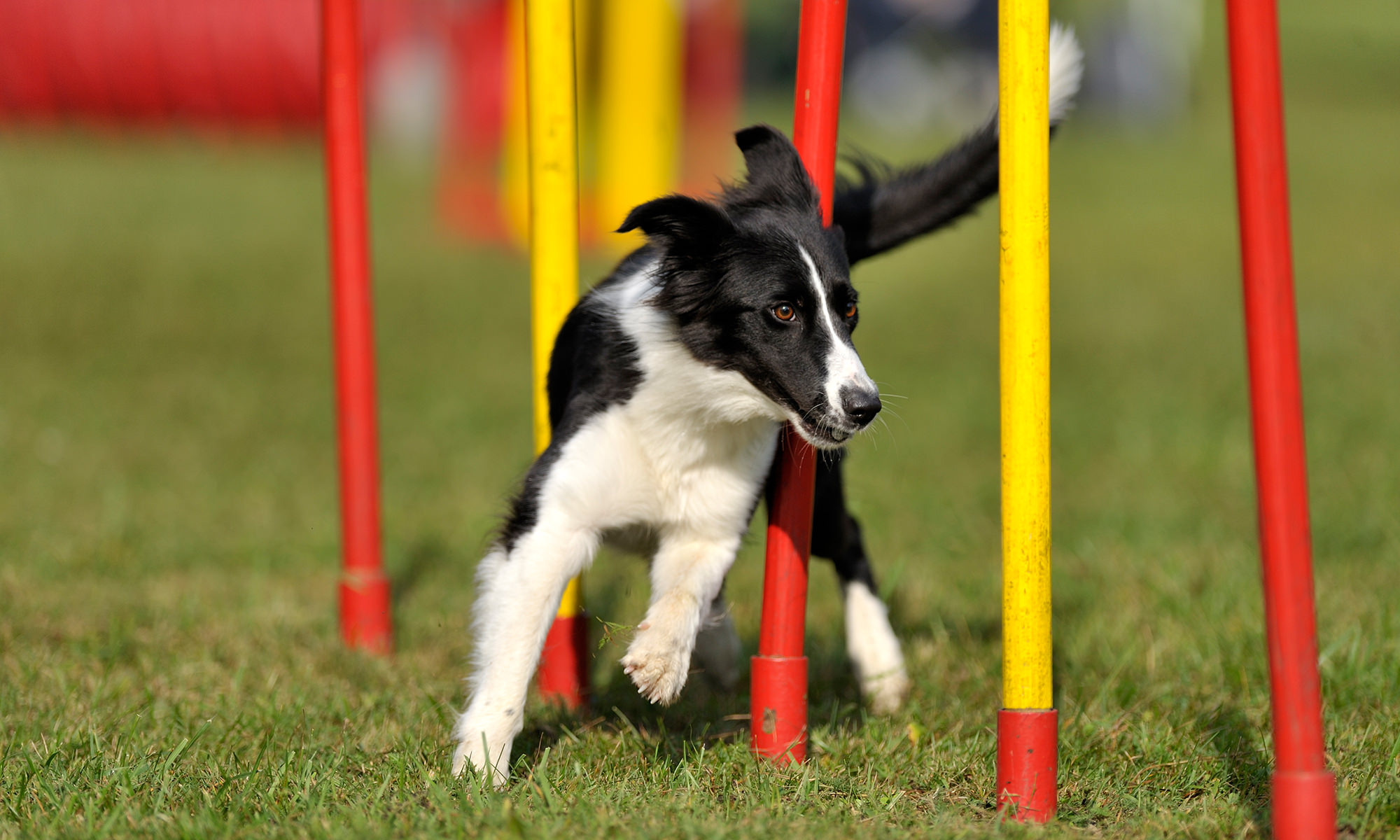 backyard playground ideas for your dog